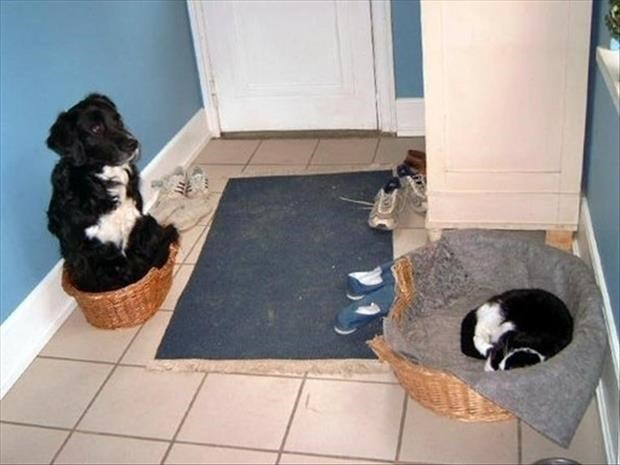 Funny picture of a cat and dog that traded beds