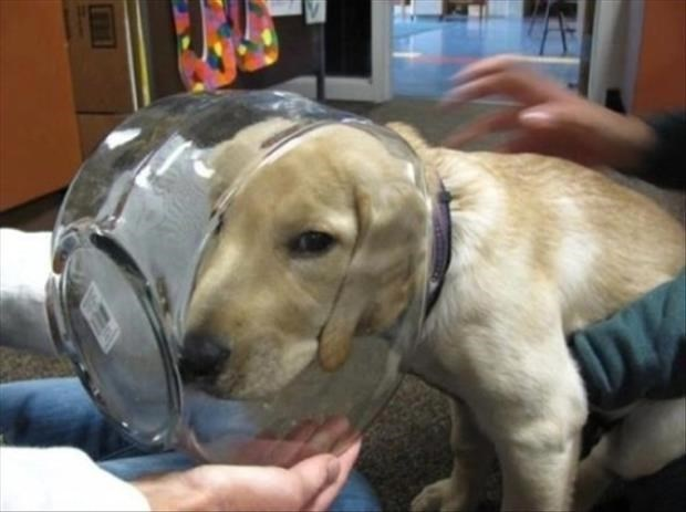 Dog that got his head stuck in a fish bowl.
