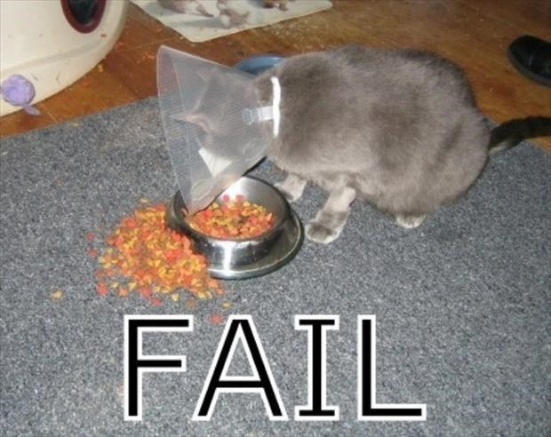 Dog with lamp shade medical cone on his head that is causing all his food to fail and fall out of it's dish.
