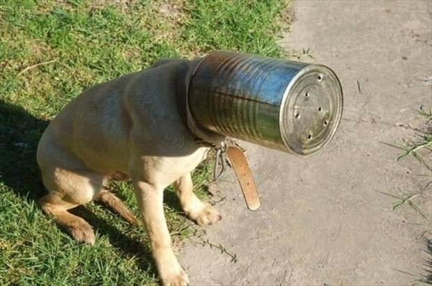 Dog with giant can on his head.