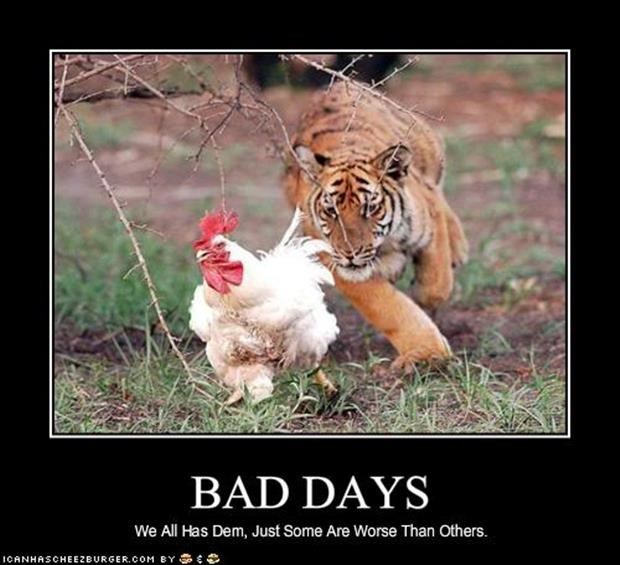 Demotivational poster about bad days with picture of a tiger chasing a chicken.