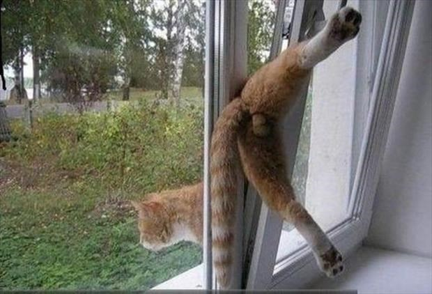 funny cat picture of a kitty stuck in a aluminum window