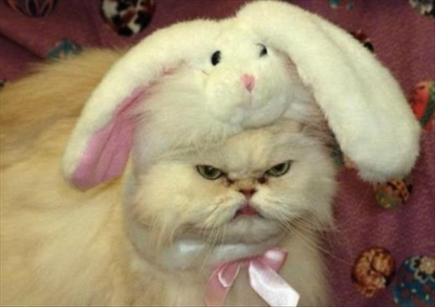 Angry cat wearing a cute bunny hat.
