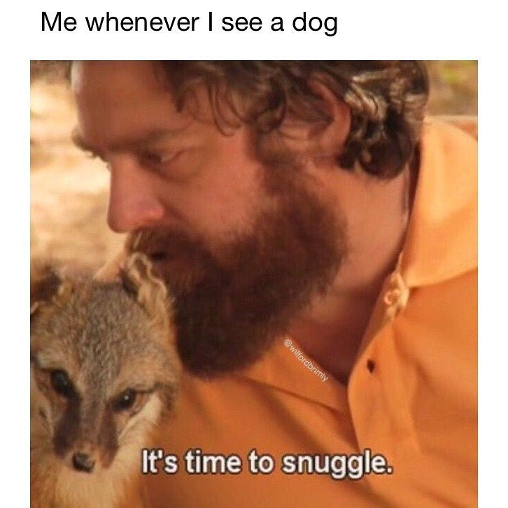 Funny meme about how when you see a dog you just have to snuggle with them.