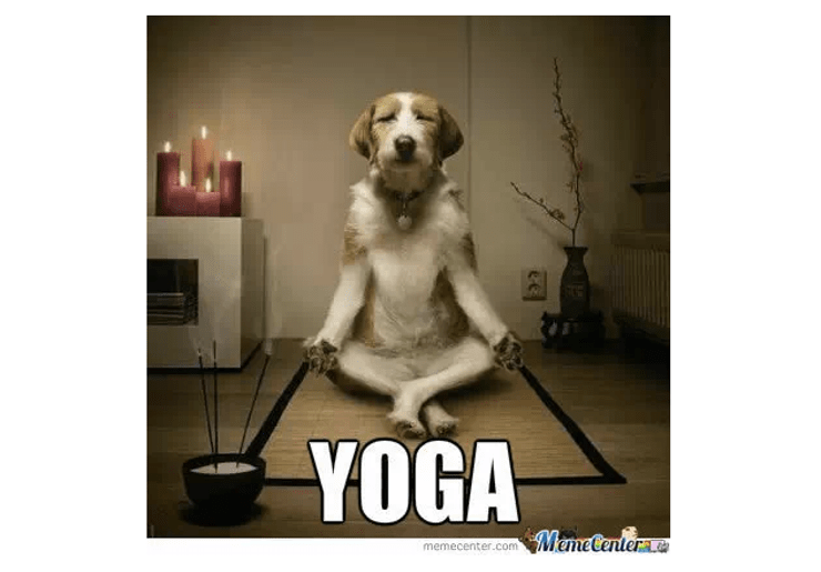Dog breed - YOGA MemeCenterte memecenter.com ee