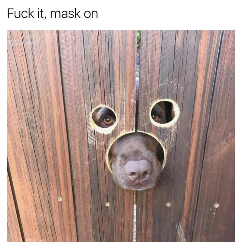 Dog with his nose and eye peaking through 3 symmetric holes in the wood, looks like he is wearing a mask.