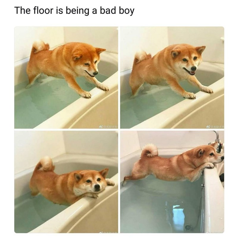 Funny meme in the style of the floor is lava, but the floor is being a bad boy - dog joke.