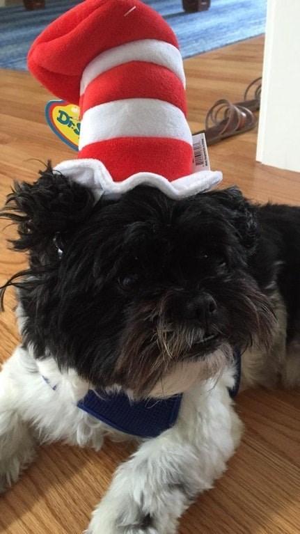 Dog - DrS