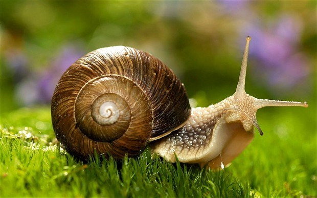 Great picture of a snail on lush green grass.