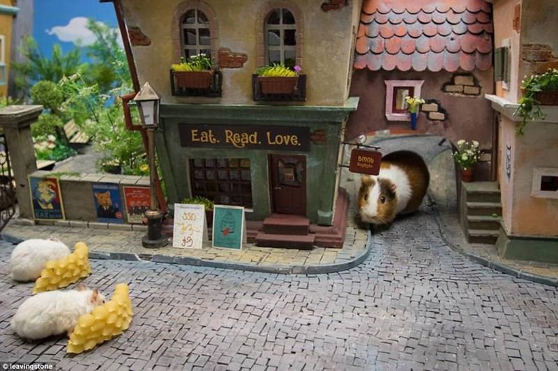 Hamster near the Eat Read Love shop in hamsterville