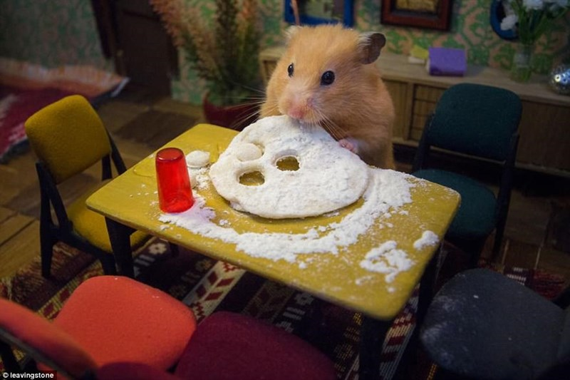 Adorable hamster eating at his tiny little table.
