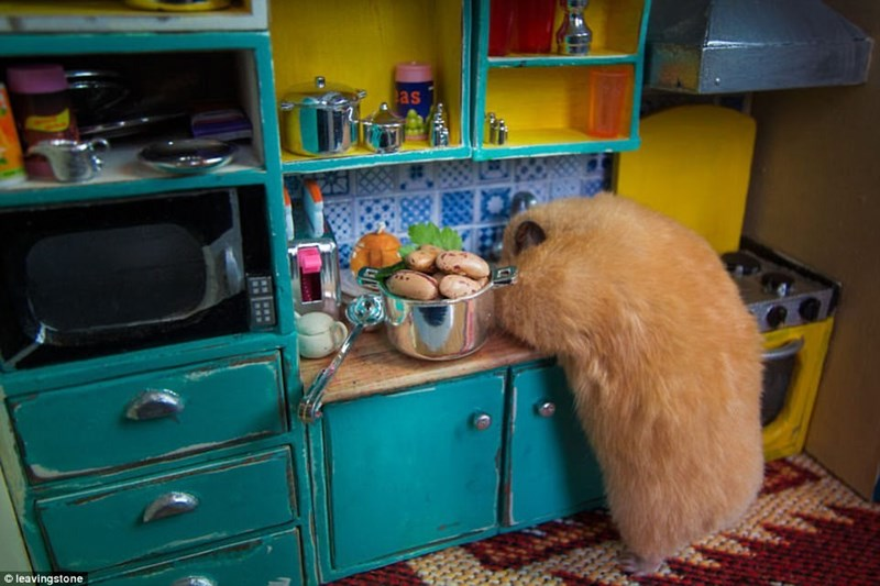 tiny kitchen for a hamster in Hamsterville