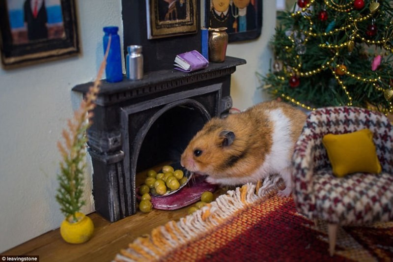 cute little hamster in a hamster house fire place