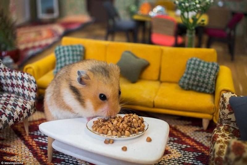 Hamster in his living room in Hamsterville