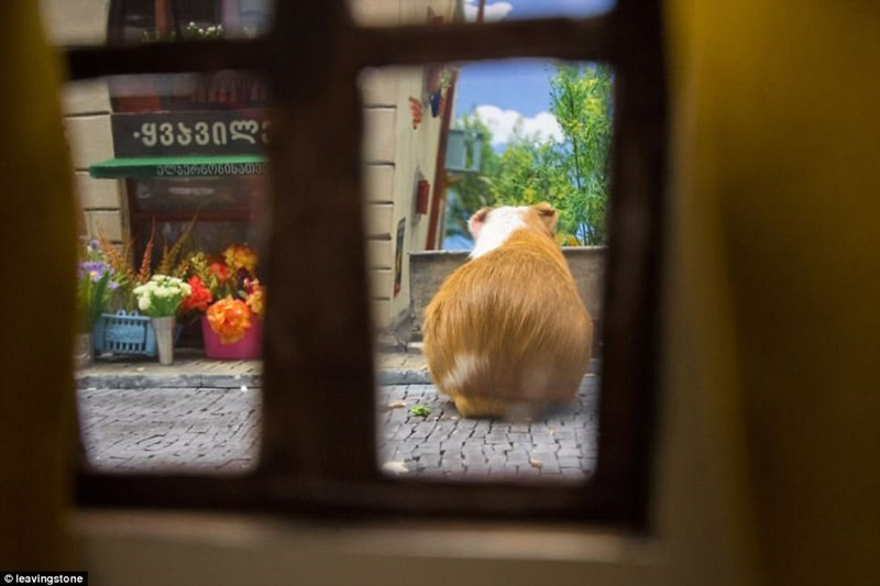 Hamsterville snapshot from inside one of the stores and hamster outside.