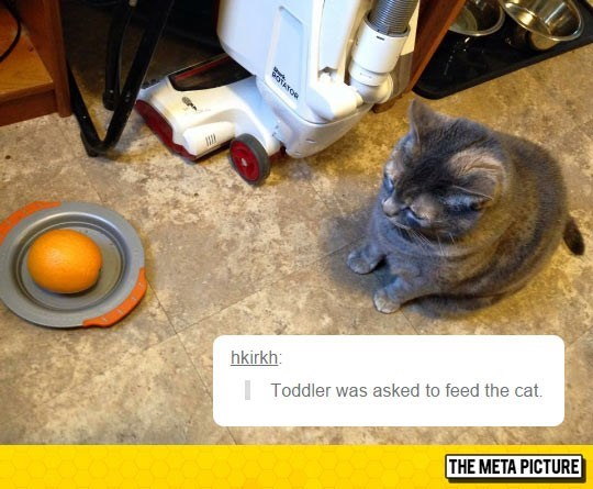 Tweet of toddler asked to feed the cat with an orange placed on the feeding bowl.