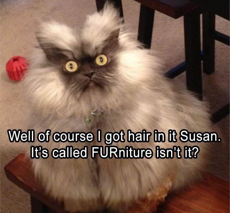 Memes Cats funny - 9046950400