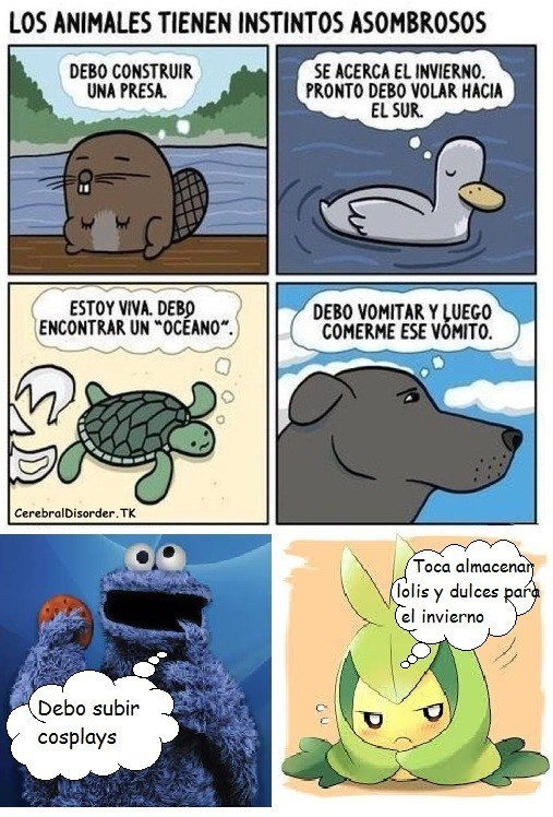 los animales tienen instintos asombrosos monstruo come galletas
