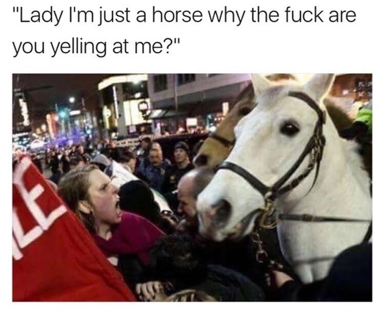 """Horse - """"Lady I'm just a horse why the fuck are you yelling at me?"""""""
