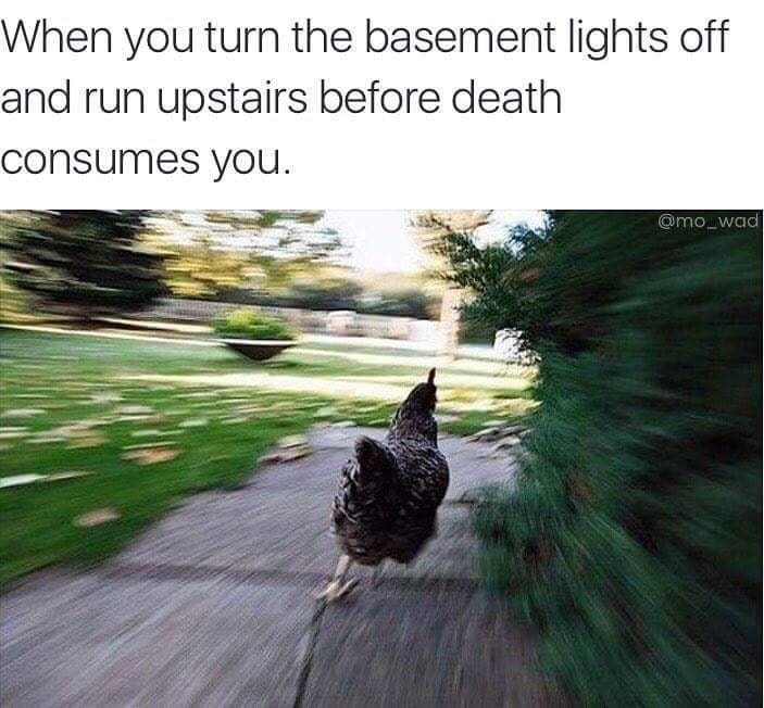 Funny meme about when you turn off the lights in the basement and run up the stairs very quickly so nothing kills you, photo of chicken running quickly.