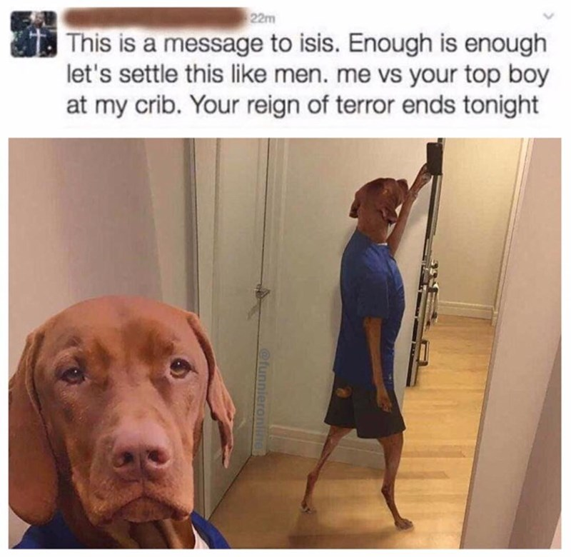 Funny meme of a dog with a human's body threatening the terrorist group ISIS/islamic state,