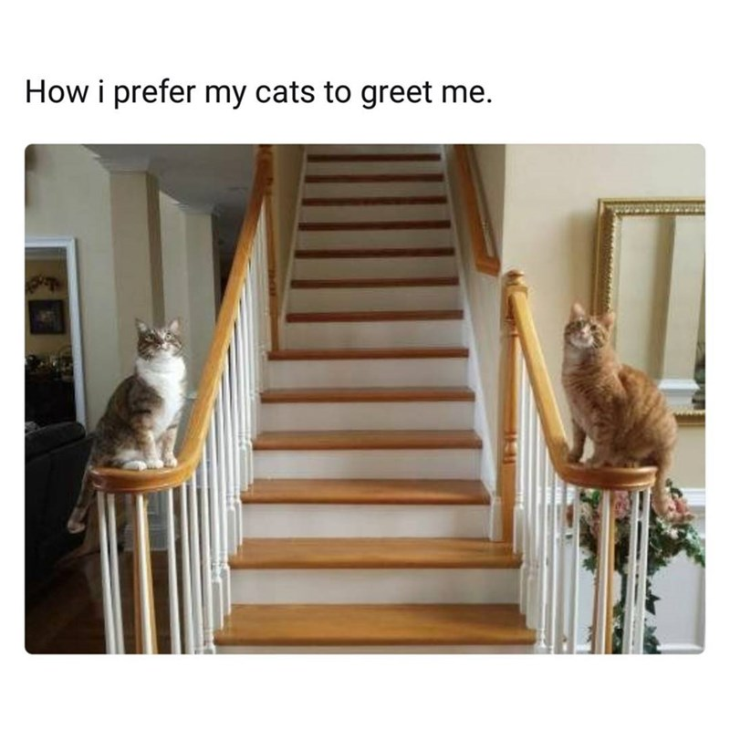 Funny meme with two cats sitting on separate banisters of staircase, text reads it is how their master prefers to be greeted.