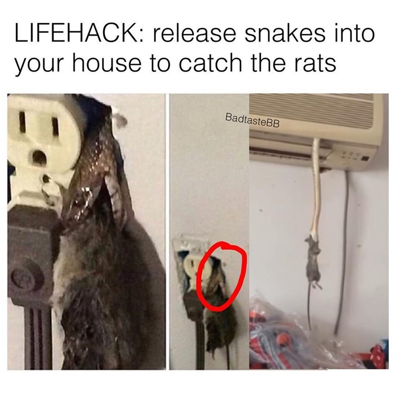 Funny fake life hack meme saying you should release snakes into your home to kill mice/rats.