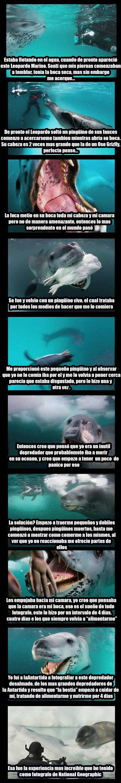 increible historia del reino animal de una foca y un buzo