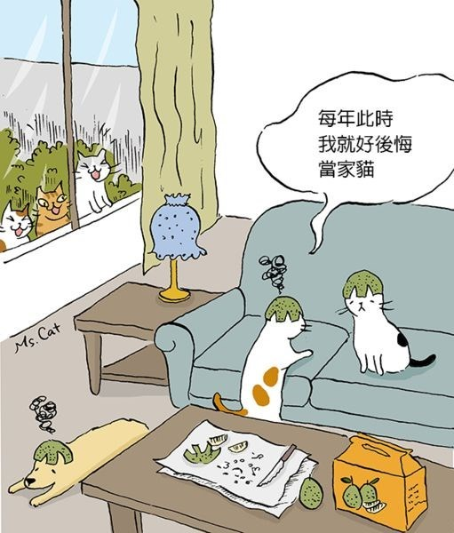 Cats outside the window making silly faces while cats inside speak Chinese and wear melons on their heads.