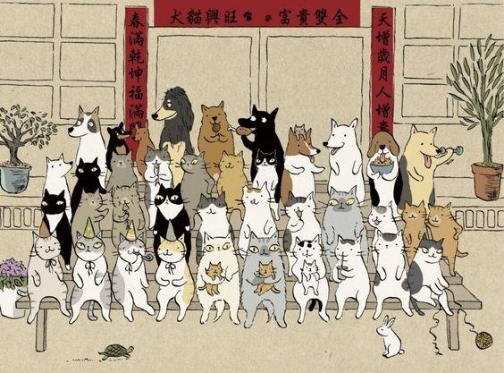 Cat family photo