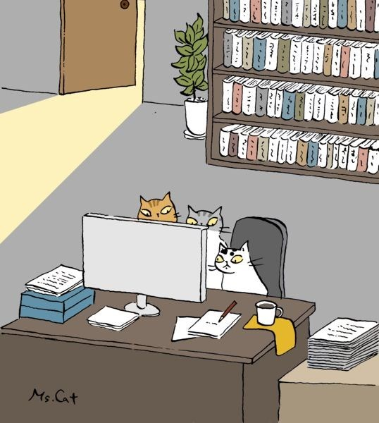 cats looking at a computer screen like teenagers.