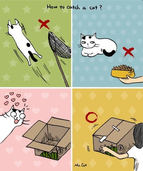 photo showing how to catch a cat