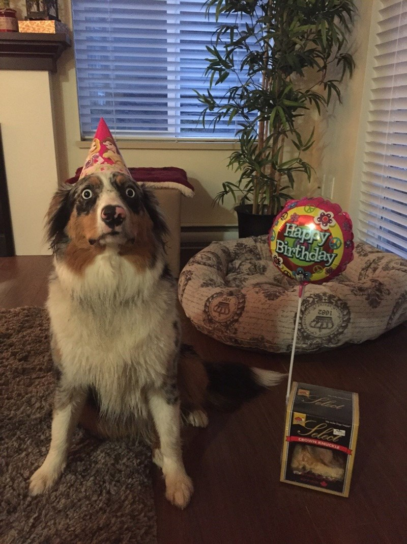 Dog looks shocked to learn that he has turned another year older.