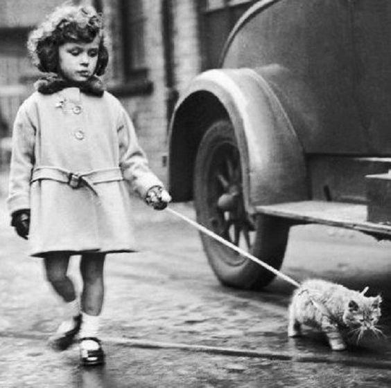 vintage animal pics - Canidae