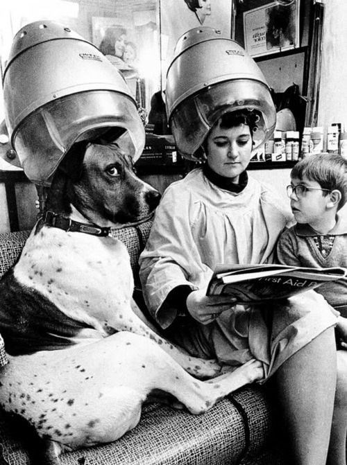 vintage animal pics - Personal protective equipment - dbw rst Aid