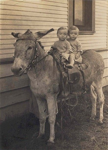 vintage animal pics - Horse