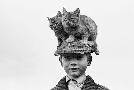 vintage animal pics - White