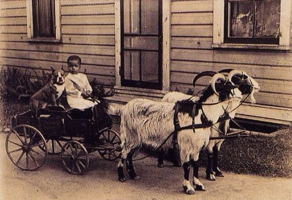 vintage animal pics - Cart