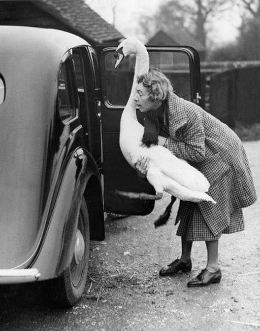 vintage animal pics - Photograph
