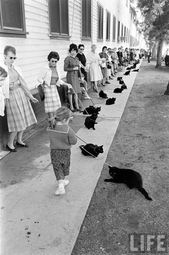 vintage animal pics - White - LIFE