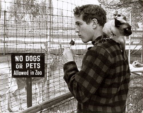 vintage animal pics - Photography - NO DOGS OR PETS Allowed in Zoo