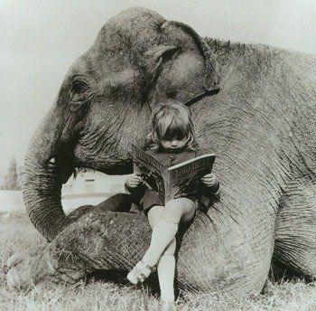 vintage animal pics - Elephant