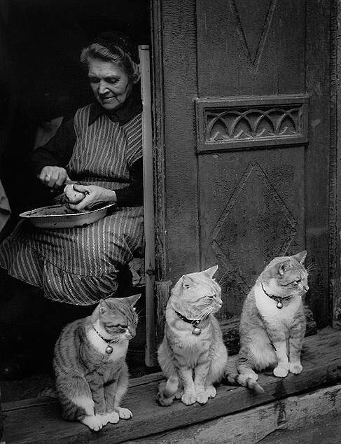 vintage animal pics - People