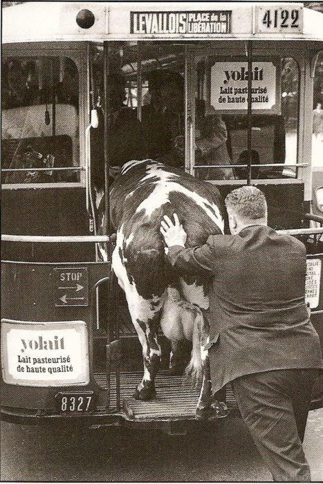 vintage animal pics - Mode of transport - 4122 LEVALLOIS PLACE de la UBERATION yok it Lait past arisé de haute halité TALIE STOP yolait Lait pasteurisé de haute qualité 8327