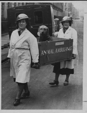 vintage animal pics - Photograph - AN MAL AMBULANCE