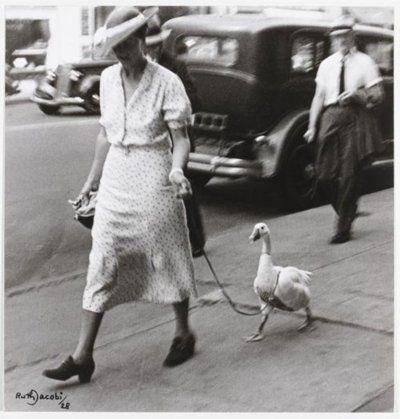 vintage animal pics - Photograph - acob