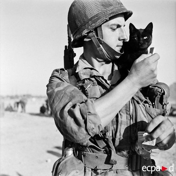 vintage animal pics - Soldier - есра d