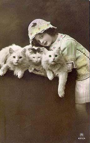 vintage animal pics - Cat