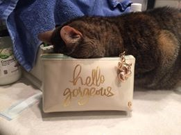 Cat with face planted right in a handbag.