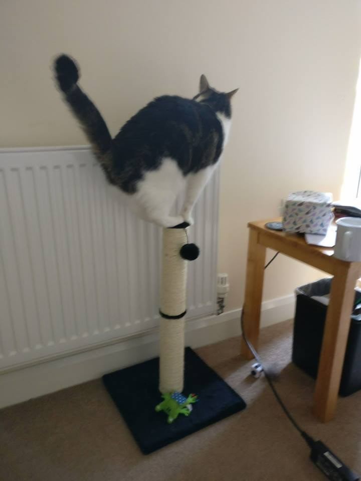 Cat balanced on a tiny spot atop the scratching post.